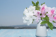 Hibiscus on wooden table, background of blue sky Stock Image
