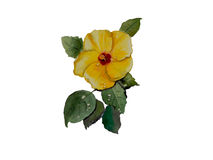 Hibiscus yellow color  illustration watercolor vector background1 Royalty Free Stock Images