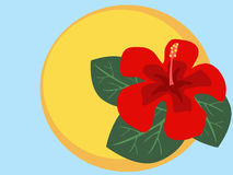Hibiscusblume Stock Abbildung