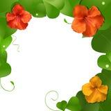 Hibiscusblumen und Blattrand Stockfotografie