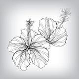 Hibiscusblumenzeichnung Stockfotografie