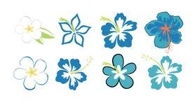 Hibiscuses y plumerias coloridos Imágenes de archivo libres de regalías