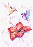 hibiskus stock illustrationer