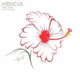 hibiskus vektor illustrationer