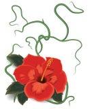 Hibiskus blommavektor Royaltyfri Fotografi