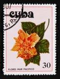 Hibiskus hibiskusserie, circa 1978 Fotografering för Bildbyråer