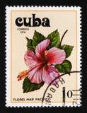 Hibiskus hibiskusserie, circa 1978 Arkivfoto