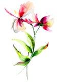 Hibiskus med Cosmea blommor Royaltyfri Fotografi