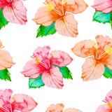 hibiskus Sömlös modell för tropiska växter exotisk blomma vattenfärg Royaltyfri Bild