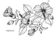 Hibiskusblommateckningen och skissar Royaltyfri Fotografi