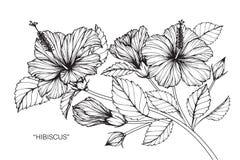 Hibiskusblommateckningen och skissar Royaltyfria Foton