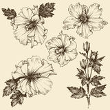 Hibiskusblommauppsättning stock illustrationer