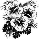 Hibiskusblommor med sidor royaltyfri foto