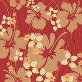 hibiskusorange Arkivfoton