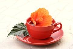hibiskustea Royaltyfria Bilder