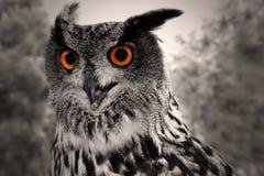 Hibou à cornes grand images libres de droits