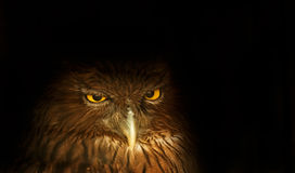 Hibou photos libres de droits