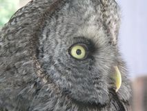 Hibou Images stock
