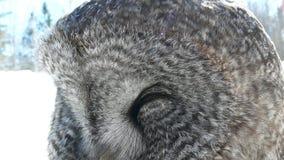 Hibou au Québec Canada, Amérique du Nord images stock
