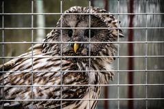 Hibou au zoo photos libres de droits