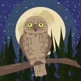 Hibou aux bois avec la pleine lune Photo stock