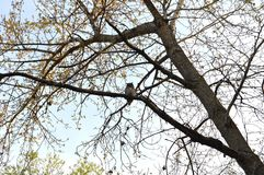 Hibou dans un arbre photos stock