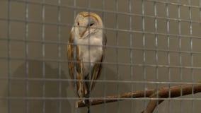Hibou dans une vue de cage dans le zoo banque de vidéos
