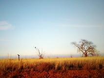 Hibou de chasse photo libre de droits