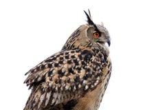 Hibou de faucon photos stock