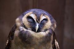 Hibou en bois de Brown photographie stock libre de droits