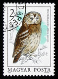 Hibou fauve ou aluco brun de Strix de hibou, vers 1984 Image stock