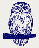 Hibou grand Image stock