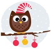 Hibou mignon de Noël se reposant sur le branchement Photo stock