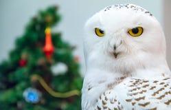 Hibou polaire strict sur un fond de nouvelle année photographie stock libre de droits
