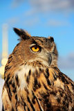 Hibou sage Photographie stock