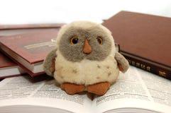 Hibou un symbole de la sagesse et de la connaissance Photographie stock libre de droits