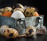Сhicken and quail eggs in a box. On a dark background Royalty Free Stock Images