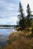 Hickey Lake Shoreline, Duck Mountain, Provincial Park, Manitoba. Trees at the shoreline of hickey lake, duck mountain provincial park, manitoba, canada royalty free stock photography