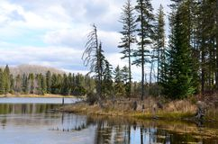 Hickey Lake shoreline with trees. In Duck Mountain Provincial Park, Manitoba Royalty Free Stock Photo