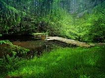 Hickory-Ablaufstatus-Park Lizenzfreie Stockfotografie