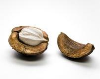Hickory Nut Stock Image