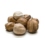 Hickory Nuts stock images