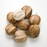 Hickory Nuts Royalty Free Stock Photos