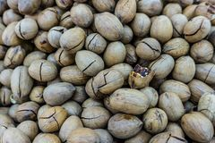Hickory Nuts Focused stock photos