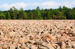 Hickorykörningsdelstatspark Royaltyfri Bild