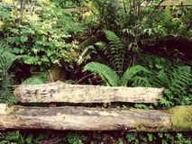 Hidden bench stock photos