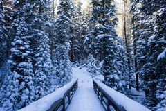 A Hidden Bridge on a Snowy Winter Hike in Colorado. Hiking in deep snow somewhere in Rocky Mountain National Park. The footprints that have traversed before Royalty Free Stock Images
