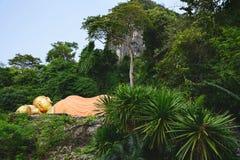 Hidden Buddha statue in tropical jungle. Krabi province, Thailand. stock photo
