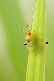 Hidden bug Stock Photos