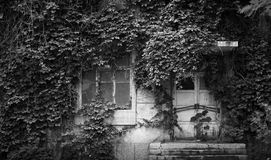 A hidden door and window. A deserted building whos window and door had been blocked by the spreading vines Royalty Free Stock Photos